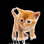cat_PNG1631
